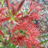 糀谷八幡神社では、秋の花が見ごろです